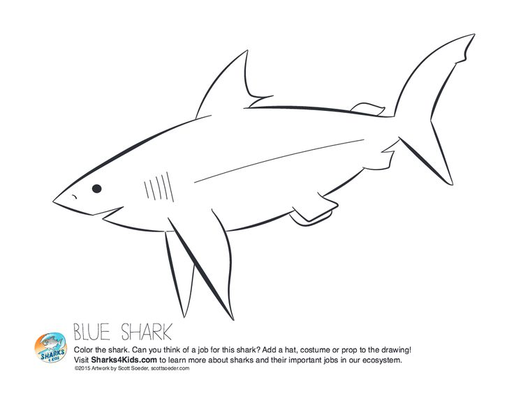 15 best Shark Education Activities images on Pinterest Shark - copy coloring page of a tiger shark