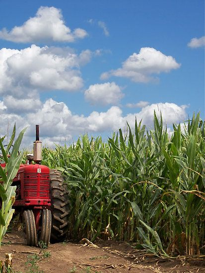 My childhood was idyllic, truly the stuff of story books.  The corn was always knee-high by the 4th of July & the skies were just as blue.