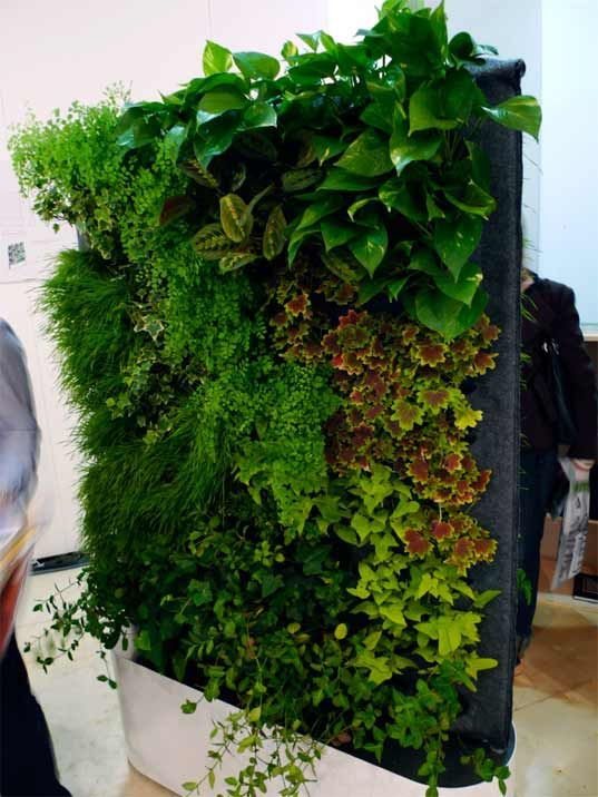 Living wall. With normal plants.  That you can find.  In a normal nursery.  They actually exist...