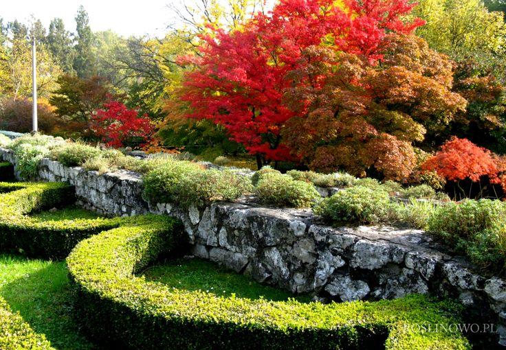 Jesienne przebarwienia drzew - discoloration autumn trees