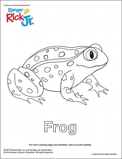 Print Out This Frog Coloring Sheet For Kids To Color From