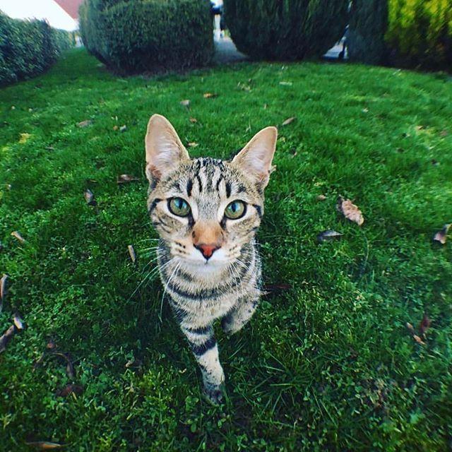 📸 CONCOURS PHOTO #PIXTERKITTY  🎉 Félicitations @audrey.vrn !  😸 Votre petit chat nous a fait craquer chez Pixter.  🎁  Vous remportez une carte cadeau d'une valeur de 50 €  👏 Bravo à tous pour votre participation et un grand MIAOU à vos modèles pour ce concours !