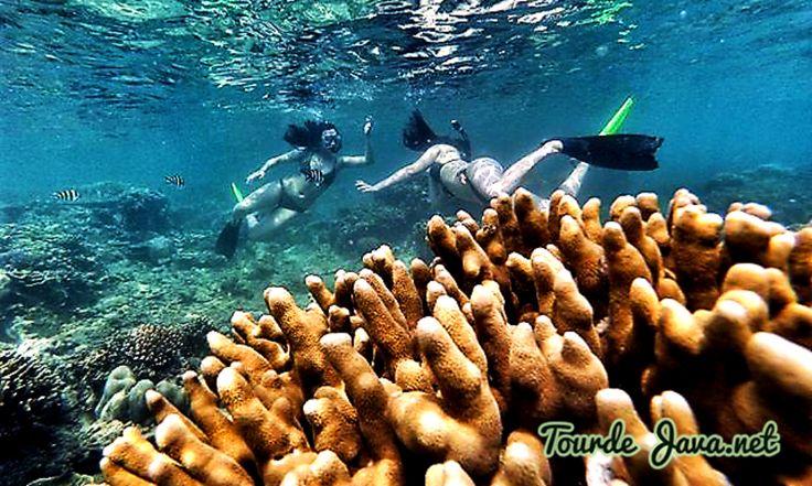 Pemandangan bawah laut Pulau Tidung masih cukup terjaga ke alamian nya. Pemerintah Pulau Tidung juga melakukan program konservasi terumbu karang di kawasan perairan Pulau Tidung Kecil. Biota lautnya yang beragam akan membuat para pecinta snorkeling betah berlama-lama bermain dengan ikan kecil sambil menikmati keindahan terumbu karang yang ada di sekitar Pulau Tidung.