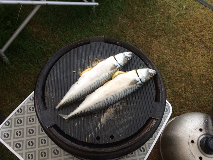 Cobb grilled mackerel