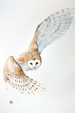 'Barn Owl' by Karl Martens