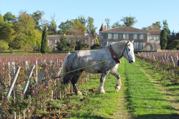 CHATEAU TROPLONG MONDOT 1ER GRAND CRU CLASSÉ B 2012 Vineyards