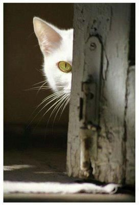 """"""" There are peoples everywhere yoo look,   and if ya play yer cards just right; de willz   leave ya alone."""""""