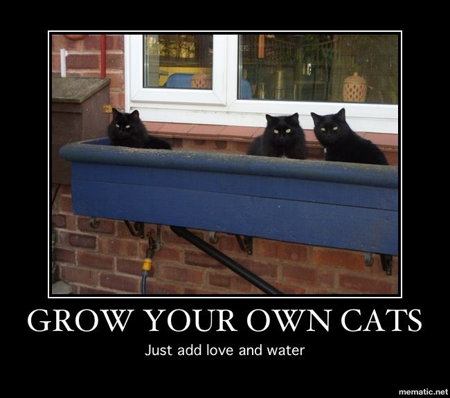 Grow your own cats