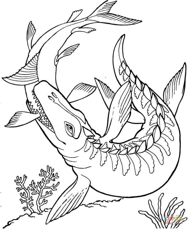 Kronosaurus Dinosaur Coloring Pages See The Category To Find More