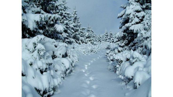 Kellemes Ünnepeket, mindenkinek! - Csík Zenekar - Karácsonyi és újévi kö...