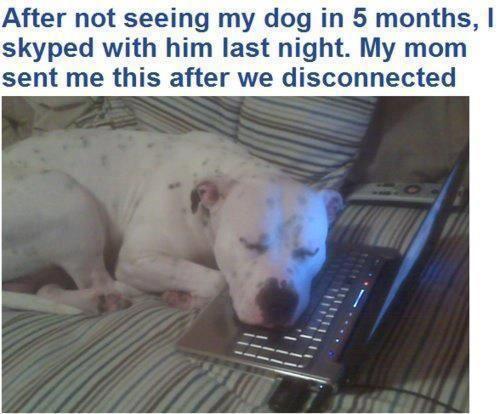 Este cão é de um soldado que está em missão. Depois de 5 meses sem se verem, os dois mataram saudades via Skype. A mãe do soldado enviou-l...