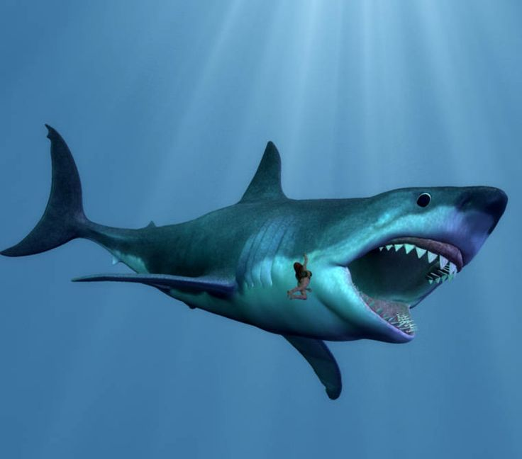 megalodon shark pictures | Megalodon Picture