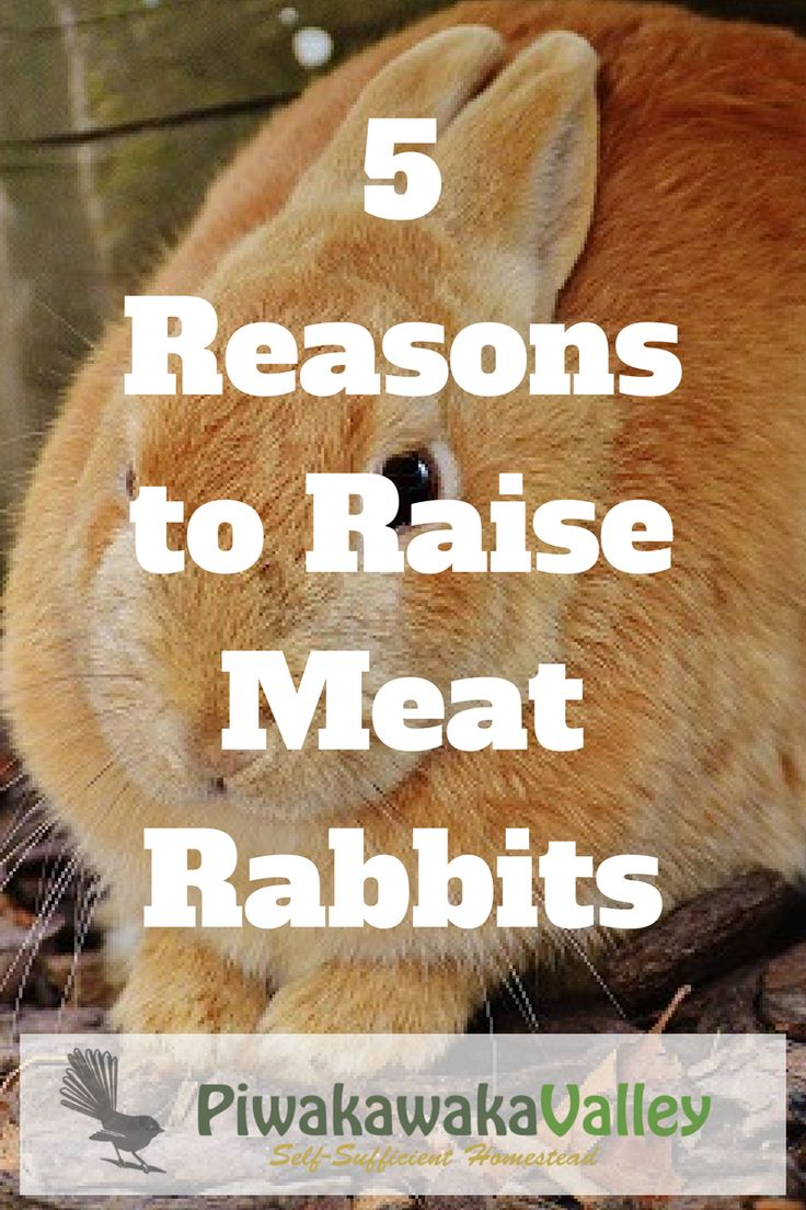 168 best rabbits on the homestead images on pinterest