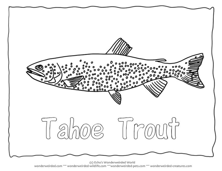 Tahoe Trout Colouring Pages 2 Fish Coloring Sheet With Pictures Fisch Ausmalbilder Kostenlose Malvorlagen