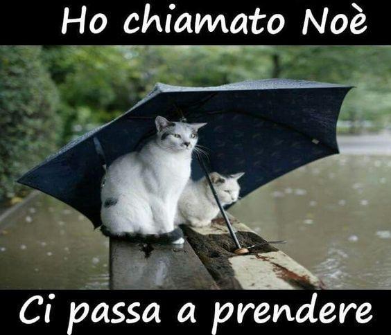 Pioggia: