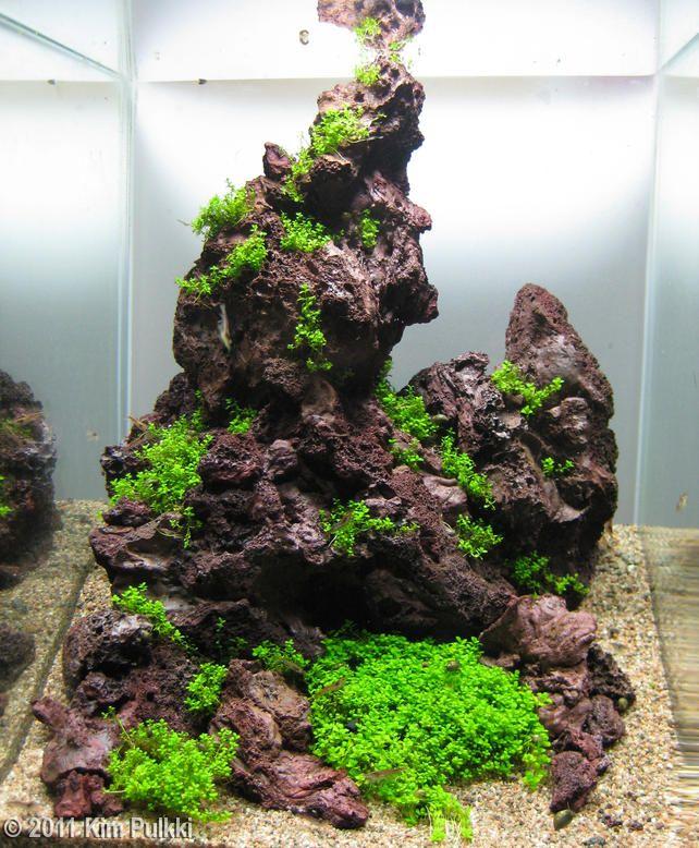 2011 AGA Aquascaping Contest - Entry #307