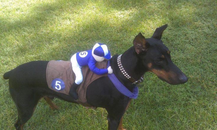 Diy Race Horse Doberman Costume Google Search Cerberus