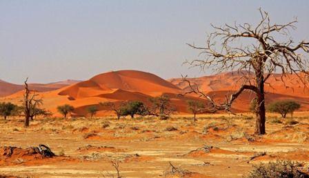 savanne africa - Google zoeken