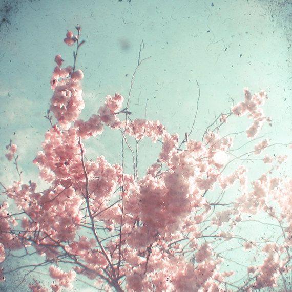 Cherry Blossom fotografie roze bloem kunst van CassiaBeck op Etsy