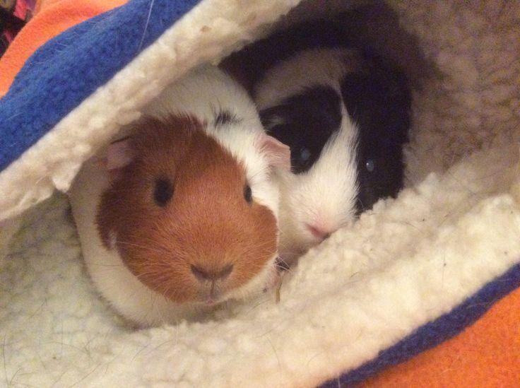 Samen in het slaapzakje!