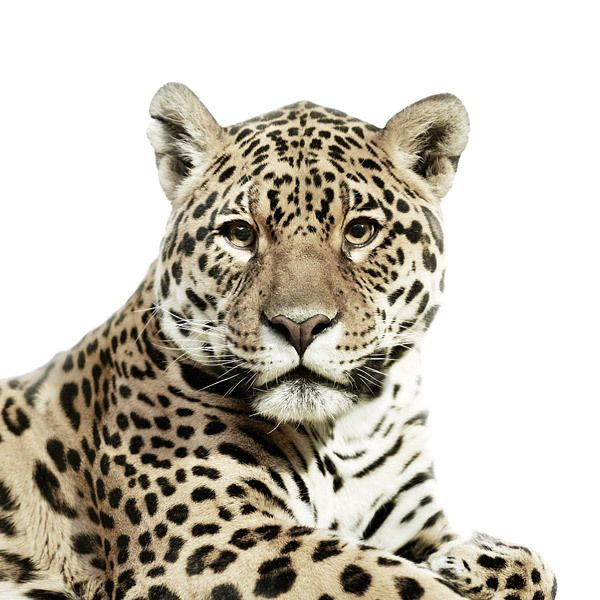 Best Animal Portraits Ideas On Pinterest Friends Of Animals - The most striking animal portraits youll ever see by morten koldby