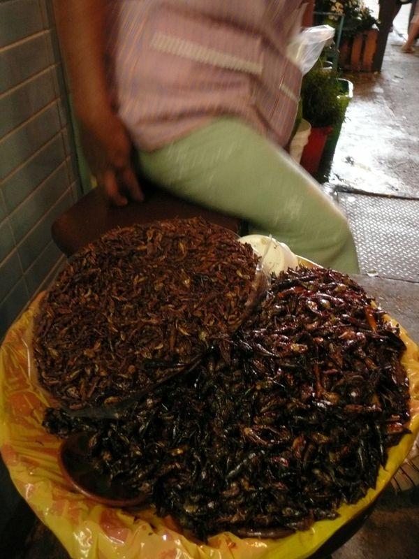 138- Insectos comestibles: los Chapulines mexicanos
