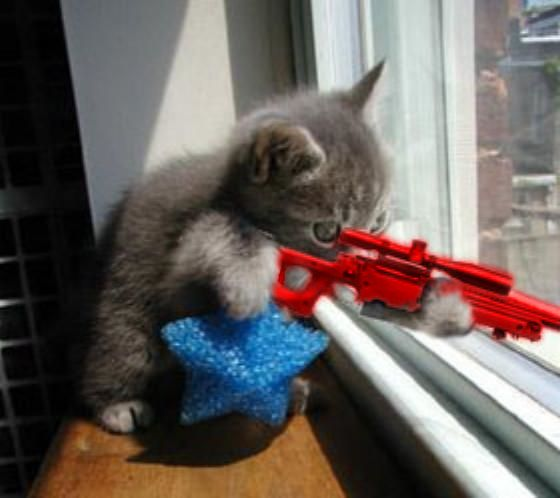 Kitten With Sniper Rifle Google Search Humor