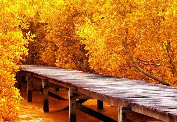 Картинки на стол телефона осень