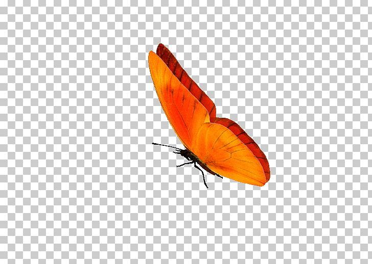 Butterfly Gif Portable Network Graphics Information Png Animaatio Animation Arthropod Borboleta Brush Footed Butterfly Butterfly Gif Gif Butterfly