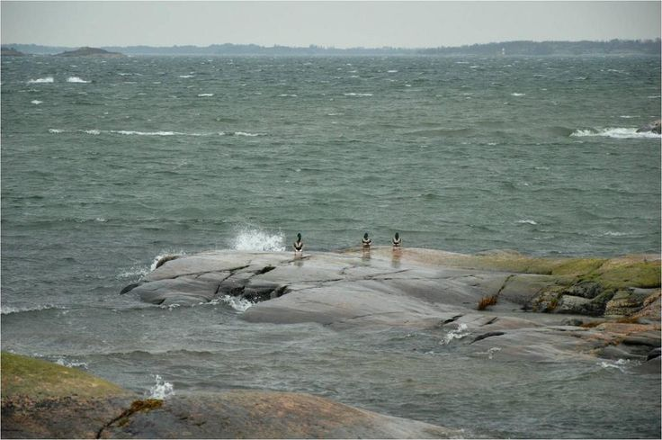 15 m/s and 10°C on October 25, 2014 in Brändö, Åland, Finland. Do the ducks dare to dive in?  Photo by Päivi Kalske.