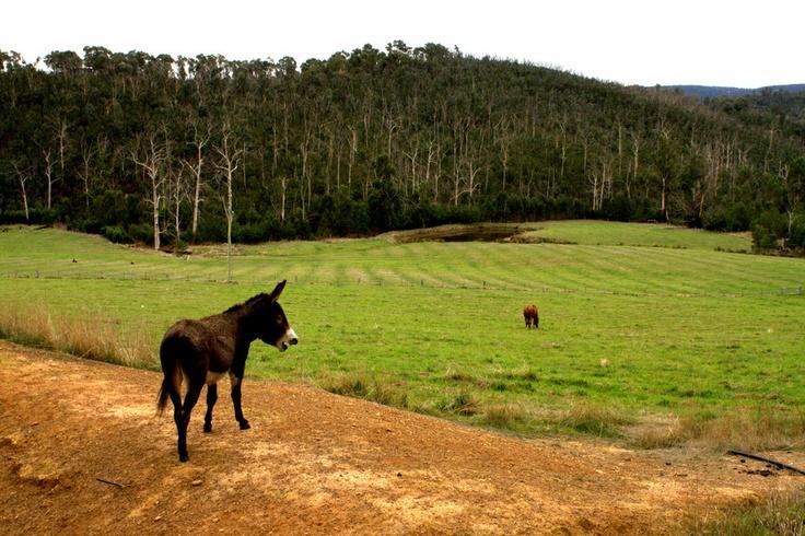 Top donkey by Jenny Campbell, via 500px