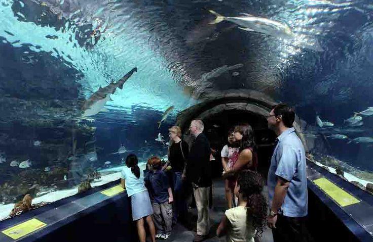 From an oceanside theme park to the smpieraquarium santa Atlantic city aquarium hours