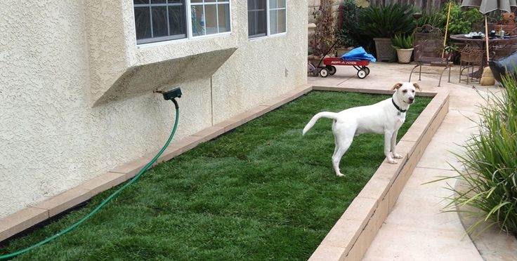 No Grass Backyard For Dogs :  Dog doors and runs on Pinterest  Doggies, Dog houses and For dogs