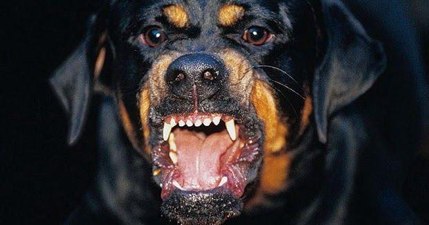 Φάκελος Ροτβάιλερ: γιατί τα σκυλιά σκότωσαν το παιδί