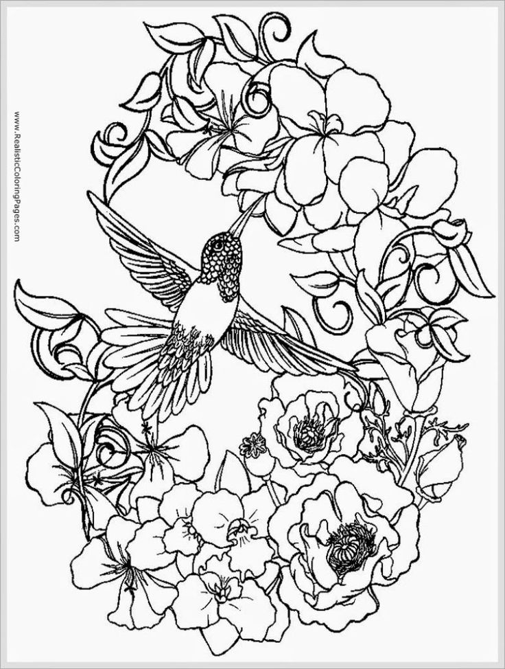 15 best greenery images on pinterest lily pad, plants and amazon Houseplants For Clean Air coloring pages appealing bird coloring pages for adults sparrows bird coloring pages for adult printable houseplants for clean air