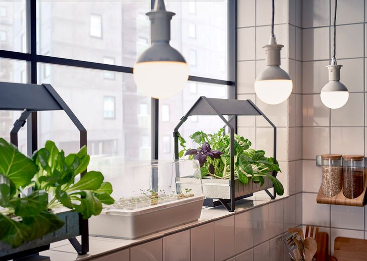 IKEA has launched its new indoor gardening kit into stores, bringing home hydroponics to a larger market than ever before