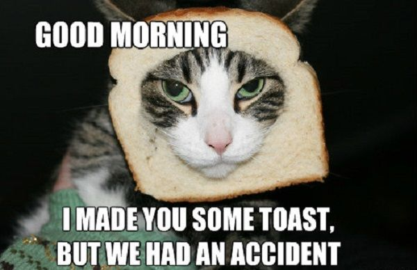 47 Best Good Morning Memes To Make Your Day Funny Good Morning Memes Morning Memes Funny Good Morning Images