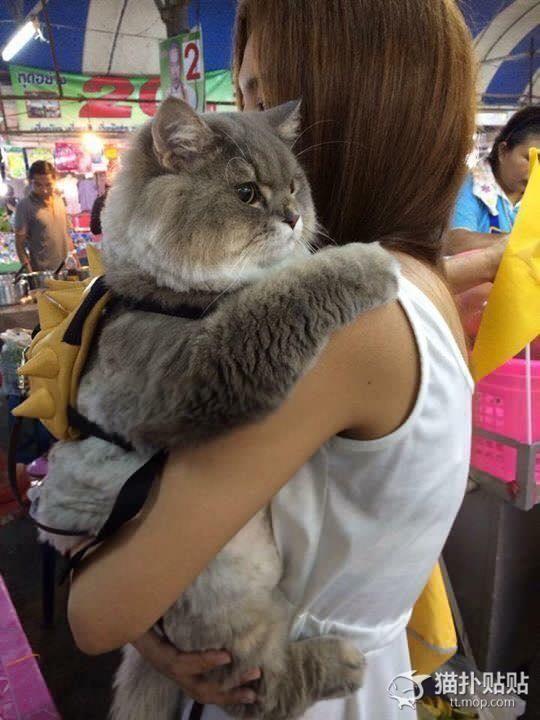 【デブすぎ】美女に抱っこされ「まんざら」でもない様子のデブ猫が可愛いと話題に|面白ニュース 秒刊SUNDAY