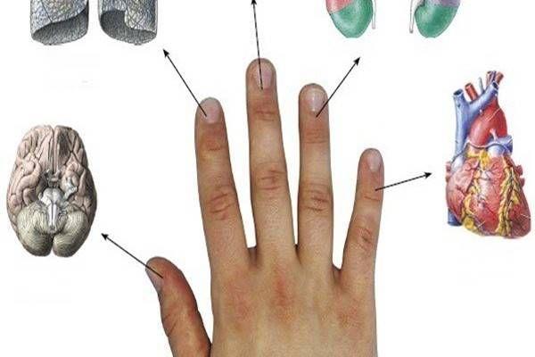 Minden ujjunk egy szervhez kapcsolódik. A japánok gyógyítási módszerüket erre alapozzák