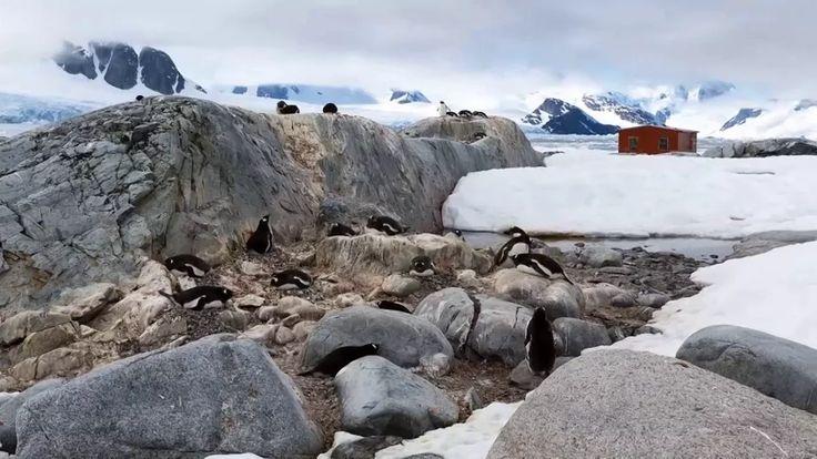 Penguinlapse on Vimeo