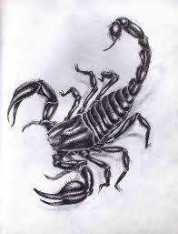 Картинки по запросу тату скорпион эскиз
