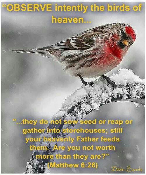 Observe intently the birds of heaven...