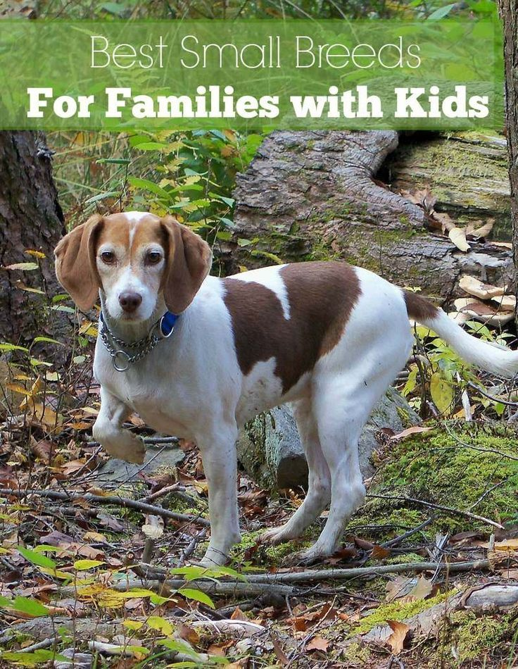 Wondering which of the small dog breeds are best for families with kids? Take a look at our list and adopt your new family friend today!