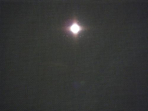 網戸越しの月