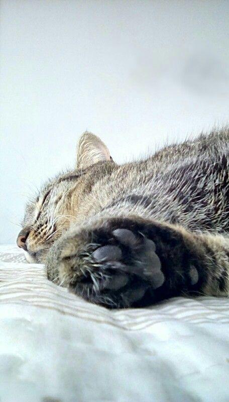 Luna taking a nap
