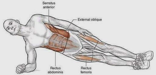 Plank exercise muscles used google muscles for Plank muscles worked diagram