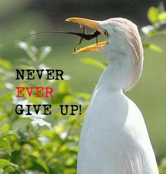Never Ever Give Up! - your skype school