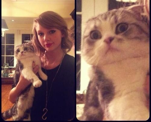 Human Meredith Grey Sent Taylor Swift The Cutest Message After Cat Meredith Grey…