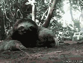 10 Sloth GIFs Everyone Needs in Their Life