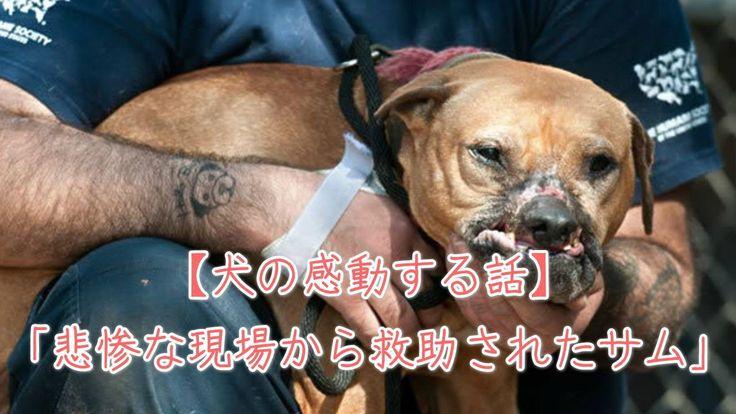 【1分涙腺崩壊】悲惨な現場から救助されたサム【犬の感動する話】
